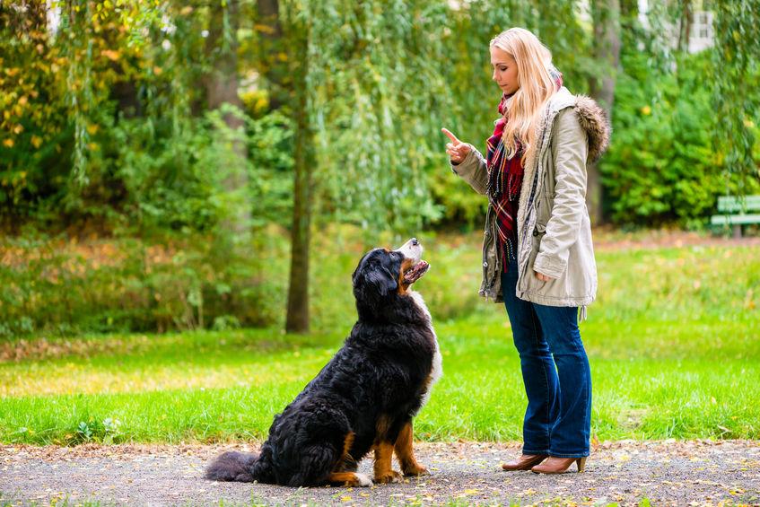 tips voor hondeneigenaren